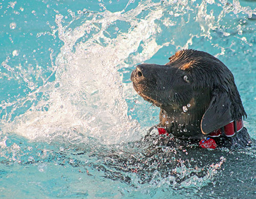 swimming-pool-with-dog-swimming-1